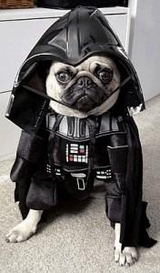Halloween dog4