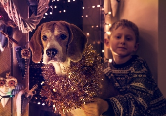 kids-will-at-some-point-decorate-the-dog