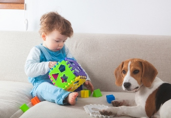 Baby Boy Playing with toy as puppy watches
