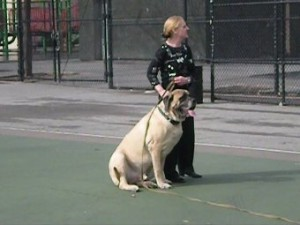 handler holds dog at park
