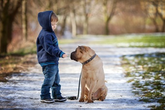 Boy meets dog