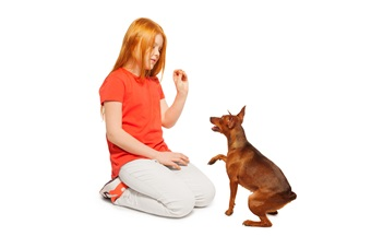 Ginger girl training her lovely pet