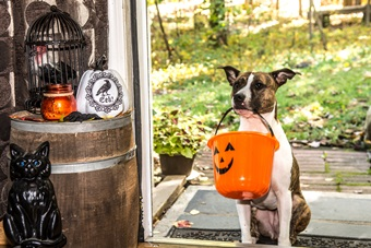 dog_with_halloween_candy_bucket